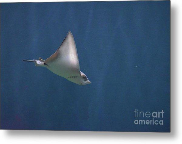 Amazing Stingray Underwater In The Deep Blue Sea  Metal Print
