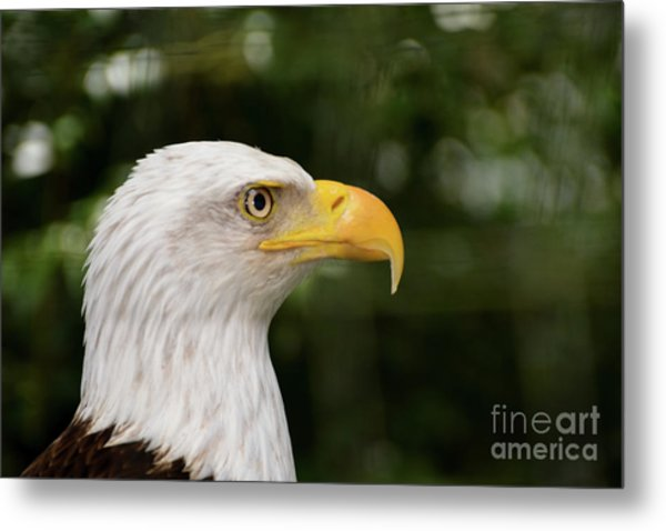 America The Great Metal Print