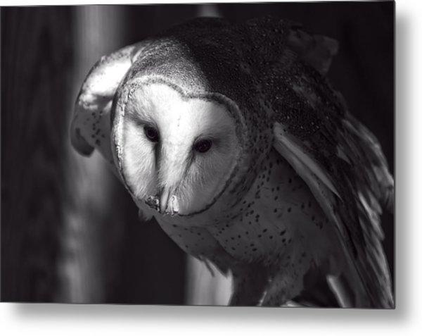 American Barn Owl Monochrome Metal Print