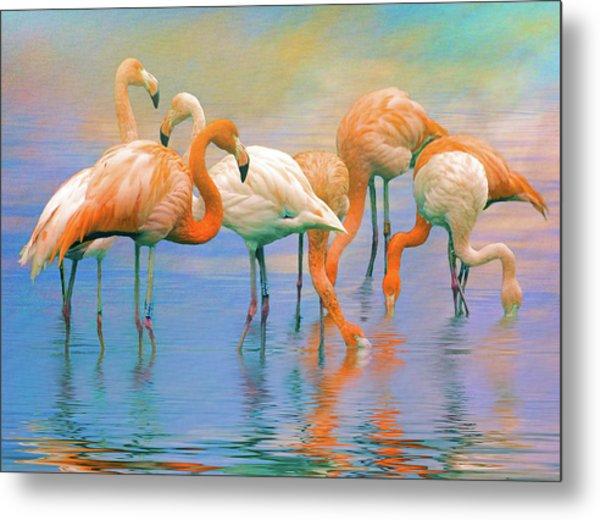 American Flamingos Metal Print