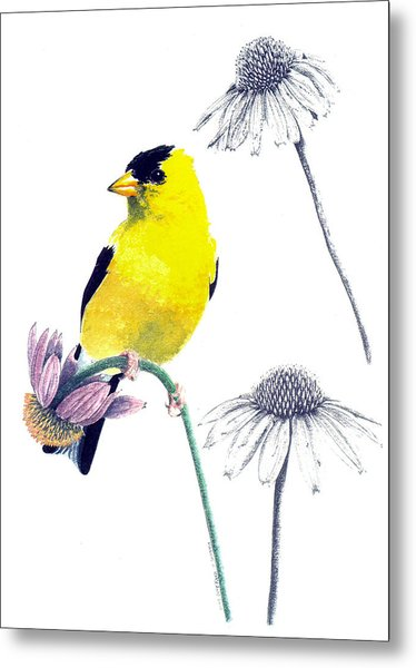 American Goldfinch On Coneflowers Metal Print
