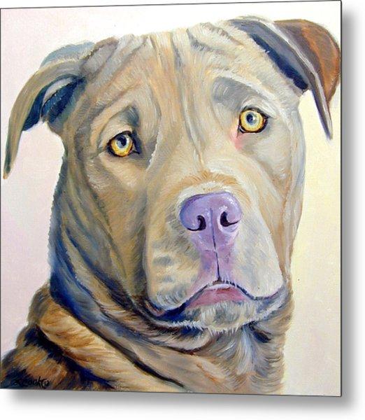 American Pitbull Terrier Metal Print