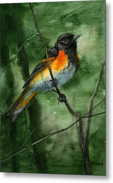 American Redstart Metal Print by Sean Seal