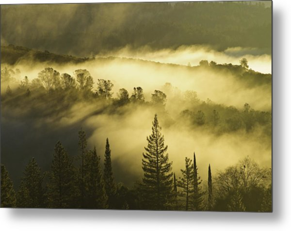 American River Canyon In The Fog Metal Print