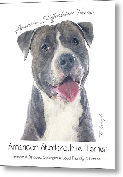 American Staffordshire Terrier Poster 2 Metal Print by Tim Wemple