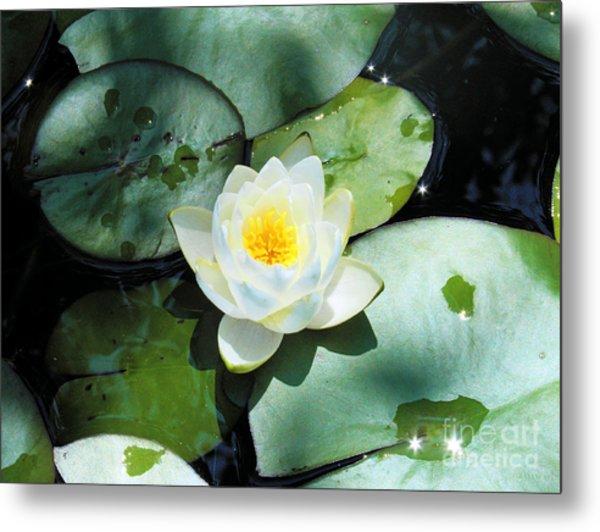 American Water Lilies Metal Print