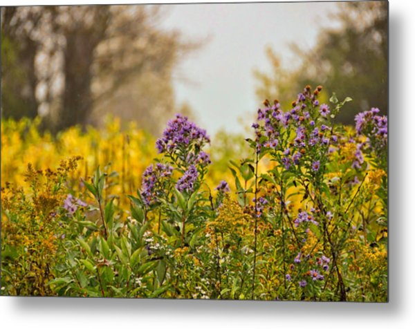 Amethyst And Golden Rod Metal Print by JAMART Photography