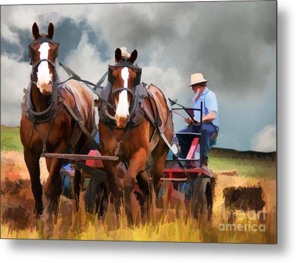 Amish Farmer Metal Print
