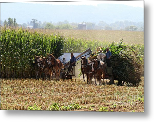Metal Print featuring the photograph Amish Men Harvesting Corn by Steven Frame