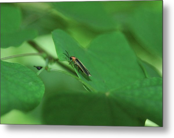 Among Green Leaves Metal Print