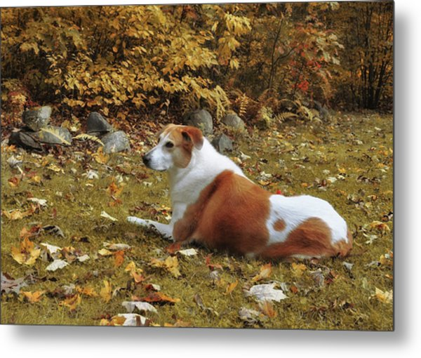 Among The Leaves Metal Print by JAMART Photography