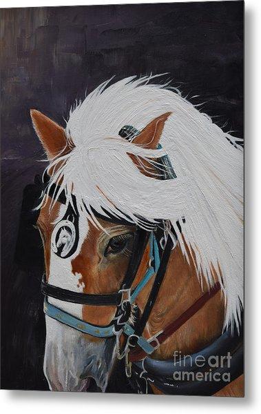 Amos - Haflinger - Horse Metal Print