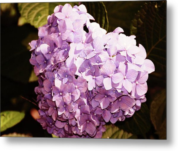 Amethyst Metal Print by JAMART Photography