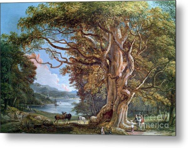 An Ancient Beech Tree Metal Print