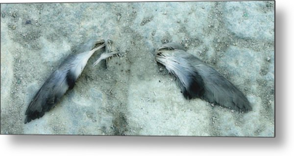An Angel Must Have Lost Its Wings Metal Print