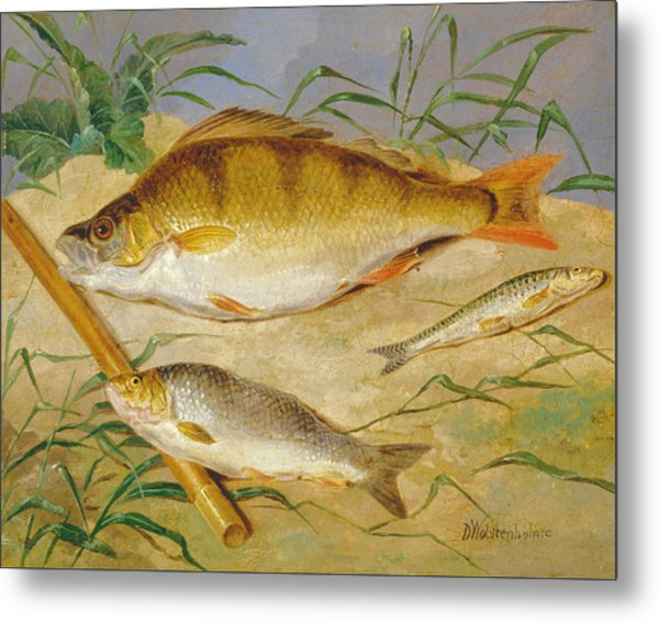 An Anglers Catch Of Coarse Fish Ca. 1850 Metal Print