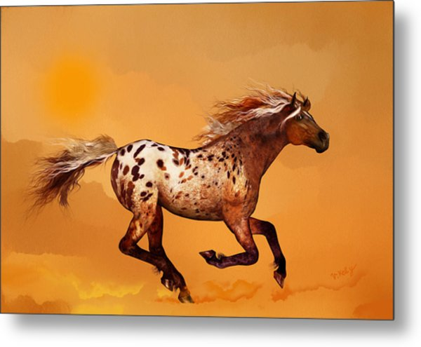 An Appaloosa Called Ginger Metal Print