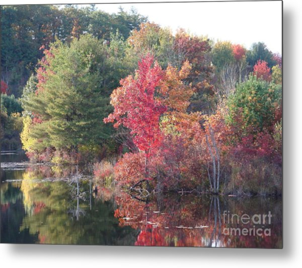 An Autum Day Metal Print by Robyn Leakey
