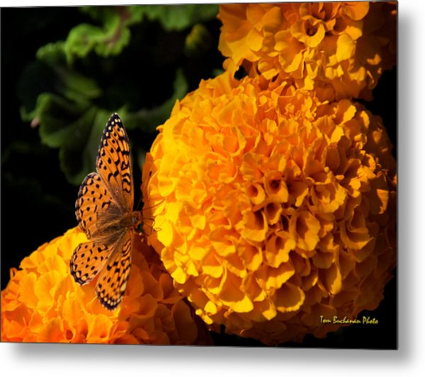 An Orange Landing Strip Metal Print