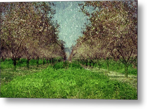 An Orchard In Blossom In The Eila Valley Metal Print