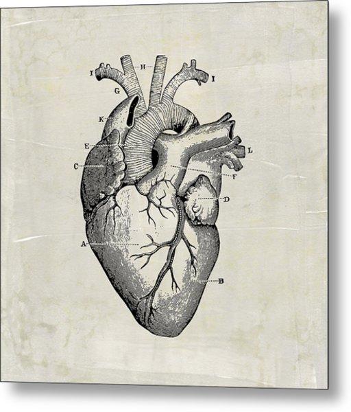 Anatomical Heart Medical Art Metal Print
