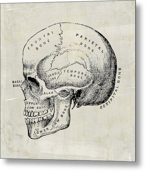 Anatomical Skull Medical Art Metal Print