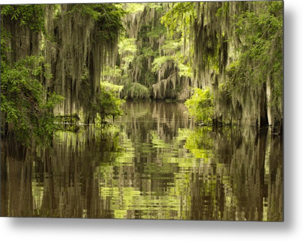 Ancient Cypress Metal Print