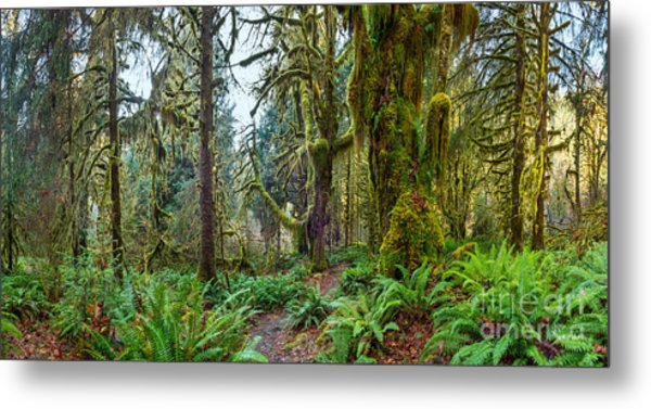Ancient Forest Panorama Metal Print