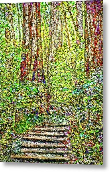 Ancient Forest Path - Tamalpais California Metal Print