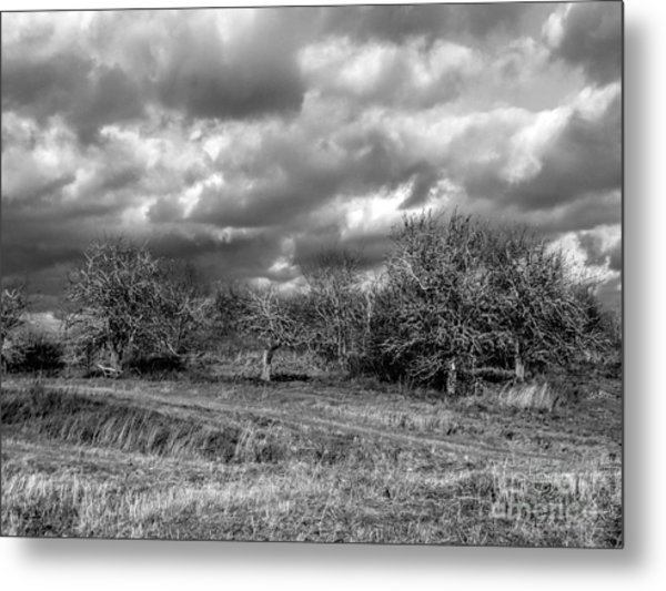 Ancient Orchard Metal Print