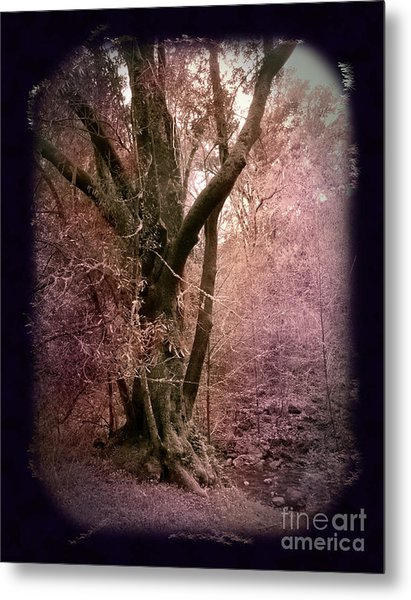 Ancient Tree By A Stream Metal Print by Laura Iverson