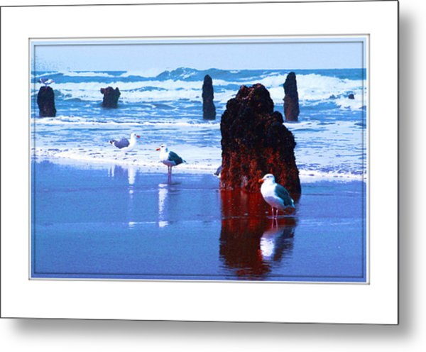 Ancient Trees And Seagulls At Neskowin Beach Metal Print by Margaret Hood
