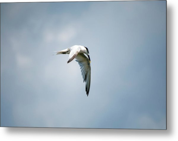 And Still The World Terns Metal Print