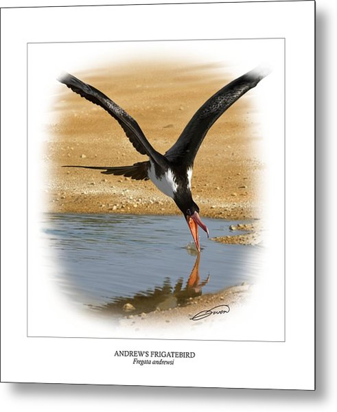 Andrews Frigatebird Fregata Andrewsi 4 Metal Print by Owen Bell