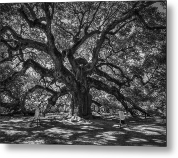 Angel Oak 002 Metal Print
