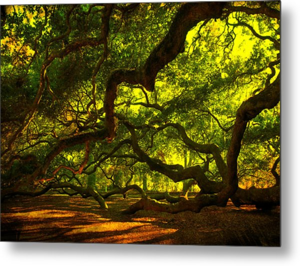 Angel Oak Limbs 2 Metal Print
