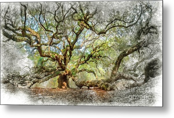 Angel Oak Mixed Media Metal Print