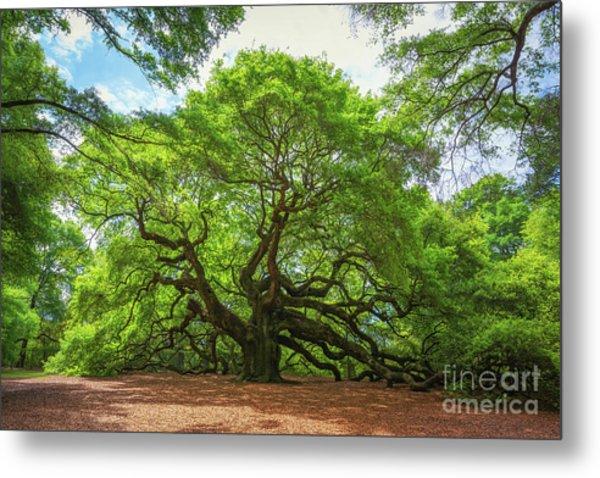 Angel Oak Tree In South Carolina  Metal Print