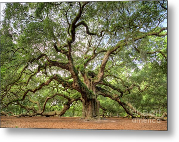 Angel Oak Tree Of Life Metal Print