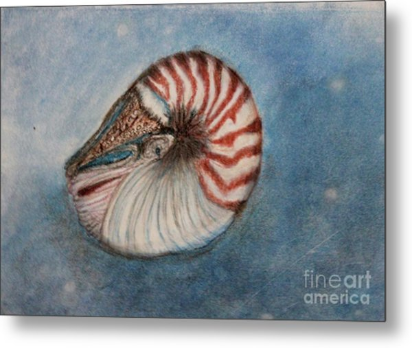 Angel's Seashell  Metal Print
