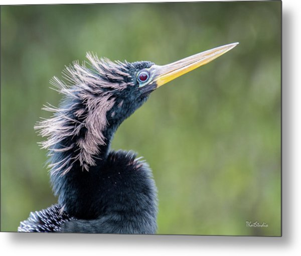 Anhinga - Like My Doo Metal Print