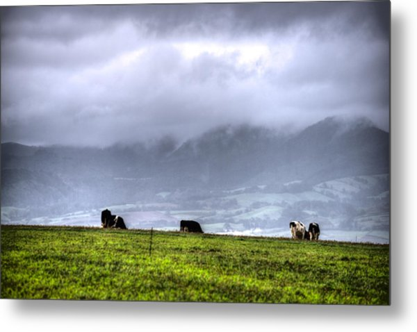 Animals Livestock-03 Metal Print