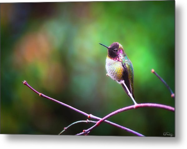 Anna's Hummingbird I Metal Print