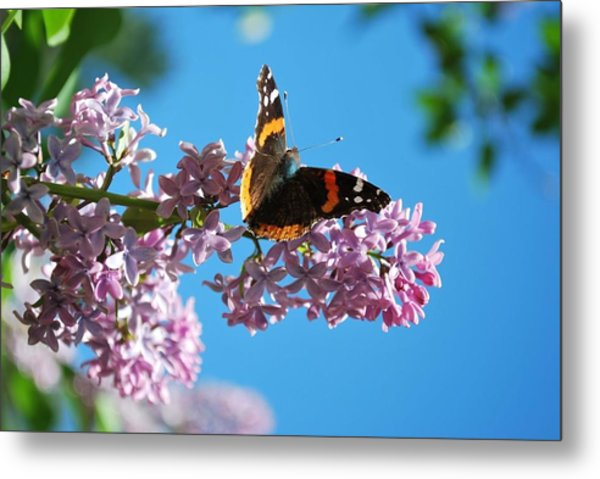 Annie's Butterfly Metal Print