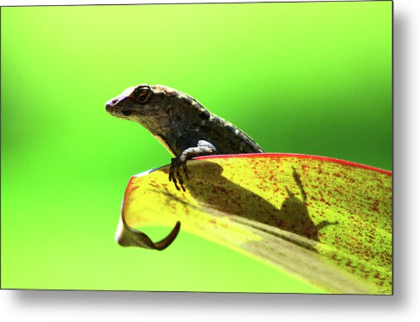 Anole In Green Metal Print