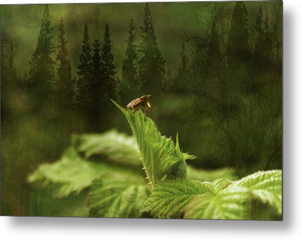Another Day Metal Print by Terrie Taylor