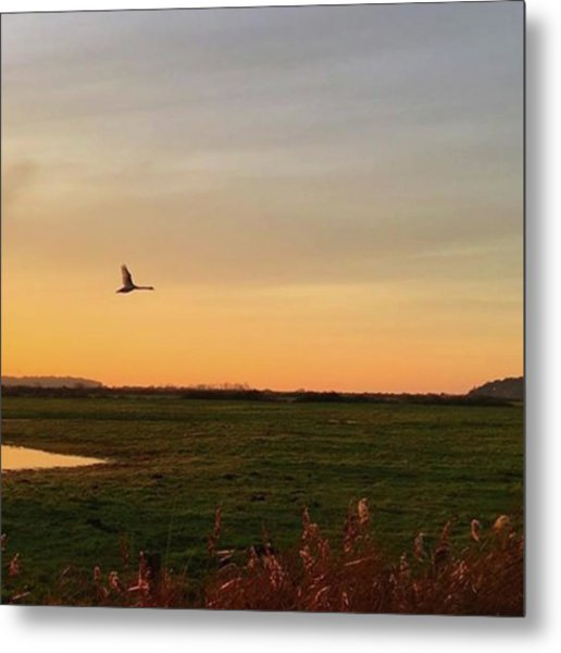 Another Iphone Shot Of The Swan Flying Metal Print