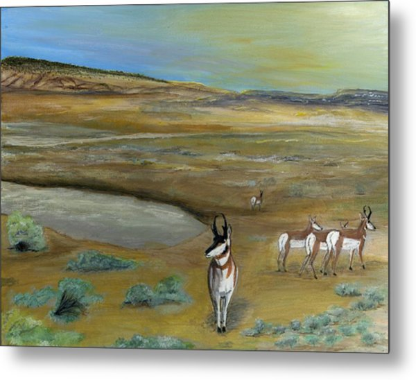 Antelopes Metal Print