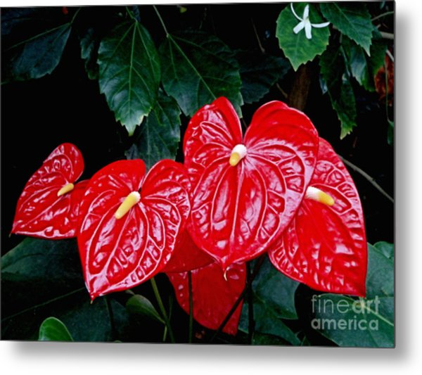 Anthurium Andreanum Metal Print by Yvonne Johnstone