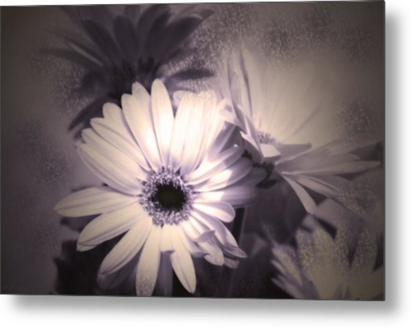 Antique Delicate Daisies  Metal Print
